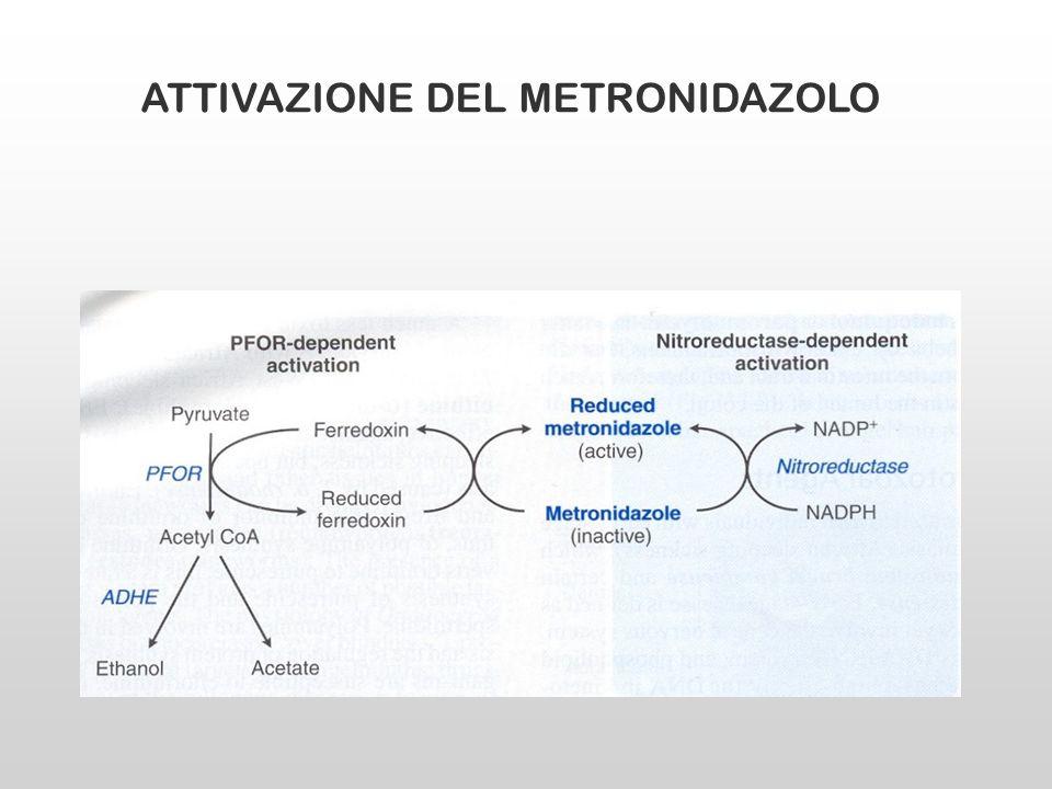 ATTIVAZIONE DEL METRONIDAZOLO