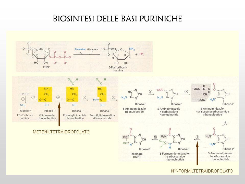 BERSAGLI MOLECOLARI DEI CHINOLONI E FLUOROCHINOLONI DNA Girasi Topoisomerasi IV Scoperta nel 1976 Codificata da gyrA e gyrB Superavvolgimento di DNA rilassato Bersaglio principale nei batteri Gram - Scoperta nel 1990 Codificata da parC e parE Decatenazione delle molecole figlie di DNA Bersaglio principale nei batteri Gram +