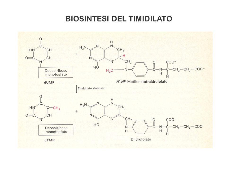 BIOSINTESI DEL TIMIDILATO