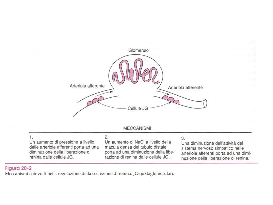 FARMACI ATTIVI SUL SISTEMA RENINA-ANGIOTENSINA-ALDOSTERONE Inibitori dellAngiotensin Converting Enzyme e delle Endopeptidasi Neutre (ACE/NEP inibitori)