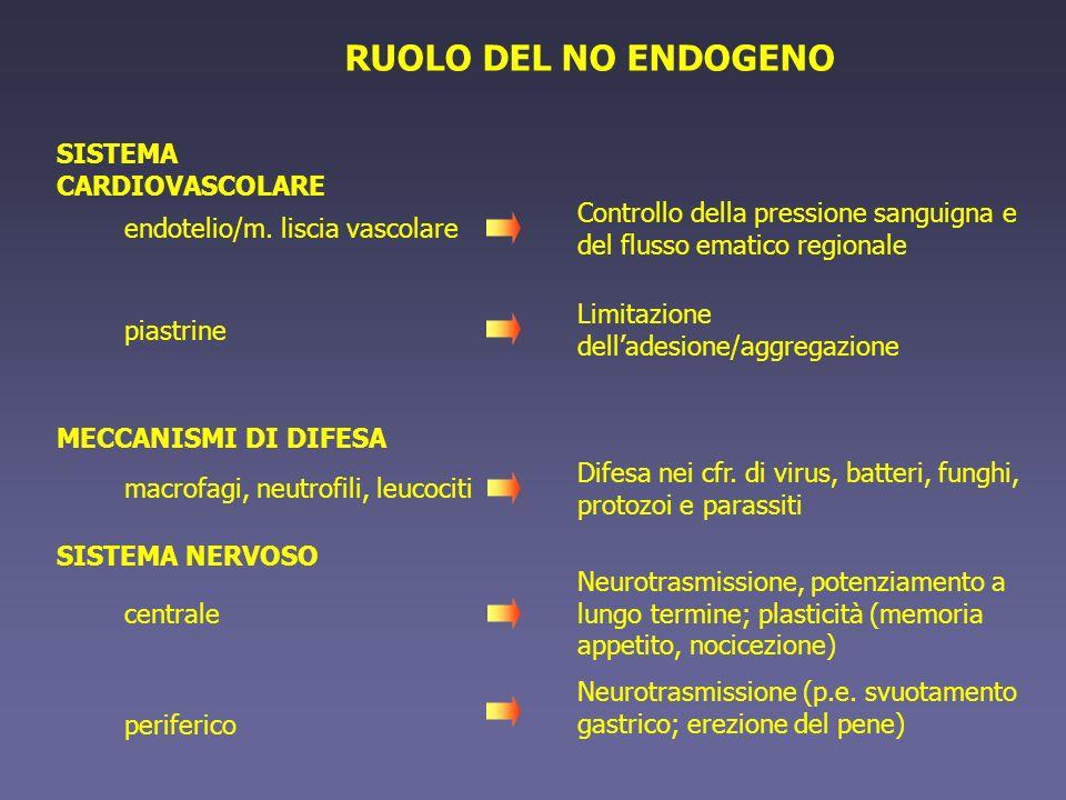 RUOLO DEL NO ENDOGENO SISTEMA CARDIOVASCOLARE Controllo della pressione sanguigna e del flusso ematico regionale piastrine Limitazione delladesione/ag