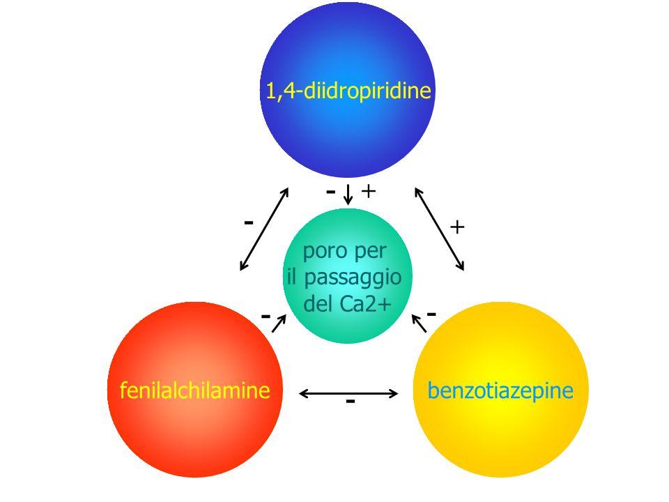 1,4-diidropiridine benzotiazepinefenilalchilamine poro per il passaggio del Ca2+ - - - + - + -