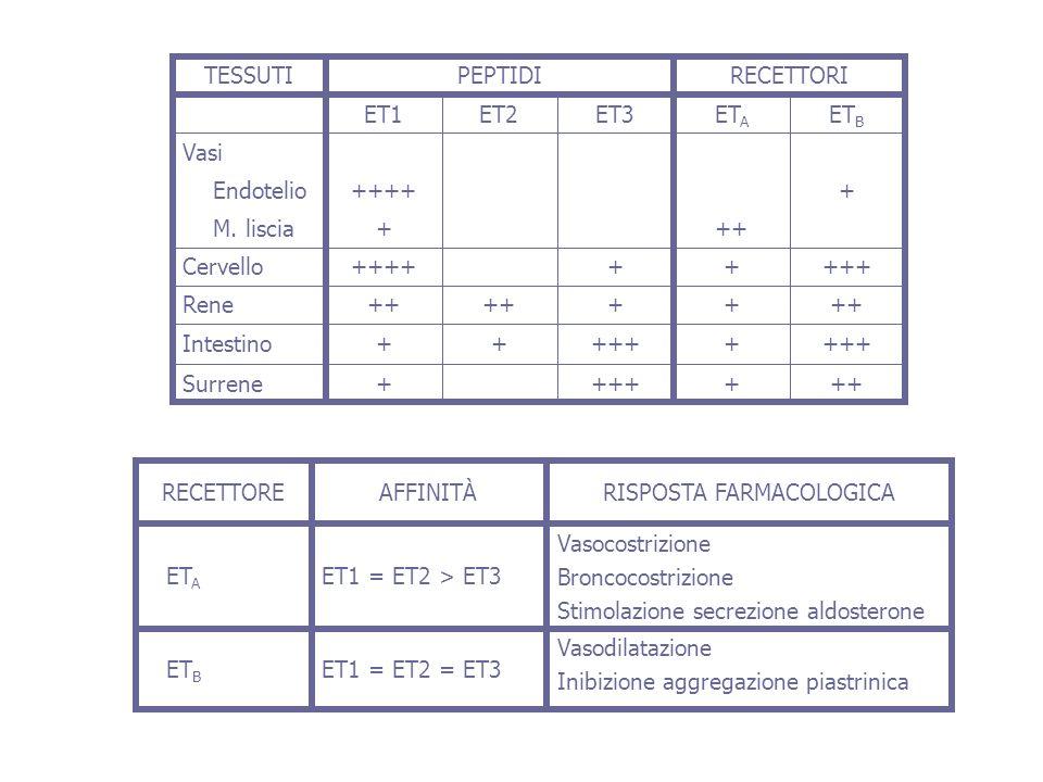 +++ ++++ +++ ++++ ++ + ++++ ++ +++ +++++ + ET B ET A ET3ET2ET1 RECETTORIPEPTIDI Surrene Intestino Rene Cervello M. liscia Endotelio Vasi TESSUTI Vasod