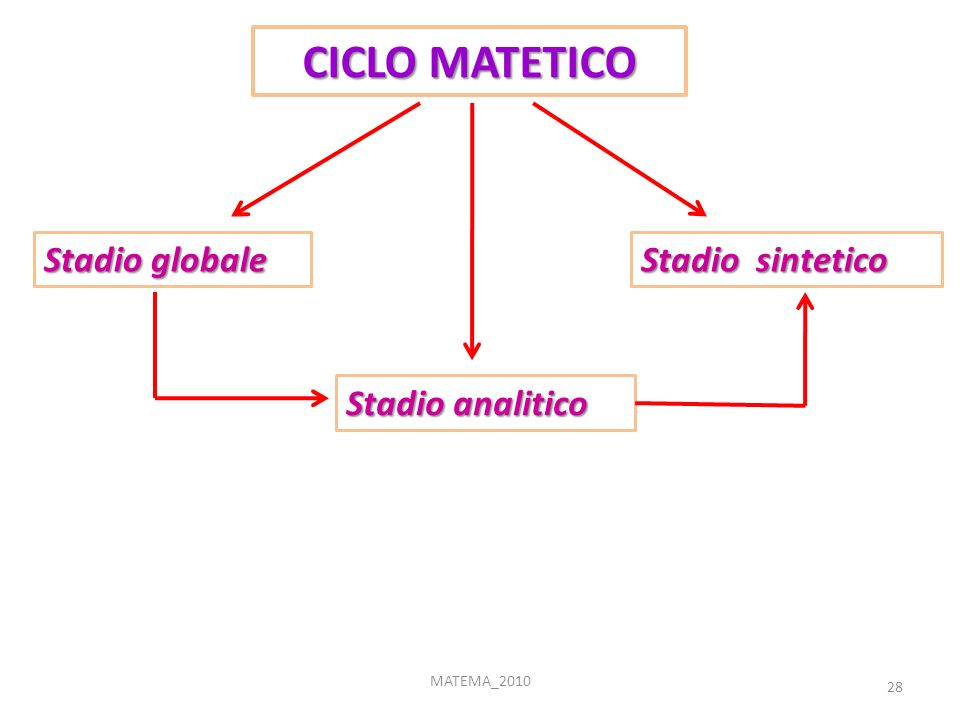 28 MATEMA_2010 CICLO MATETICO Stadio globale Stadio analitico Stadio sintetico