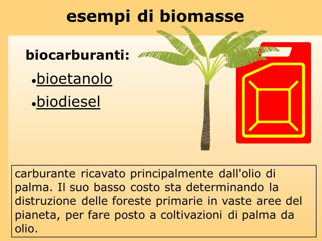 esempi di biomasse biocarburanti: bioetanolo biodiesel carburante ricavato principalmente dall'olio di palma. Il suo basso costo sta determinando la d