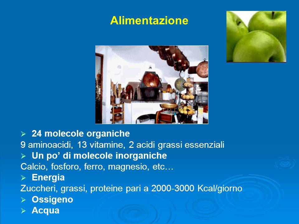 Complicazioni somatiche alcolcorrelate A cura di Cristina Cerbini Cedostar - Arezzo