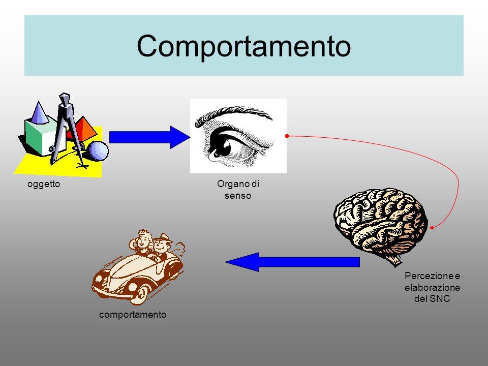 Comportamento oggettoOrgano di senso comportamento Percezione e elaborazione del SNC