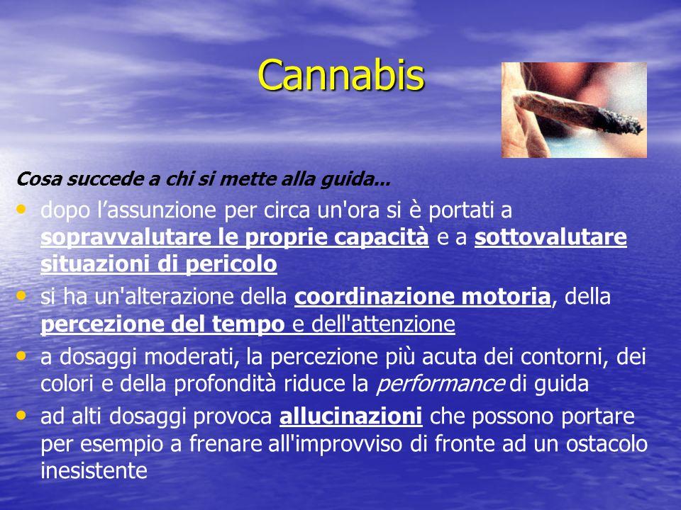 Cannabis Cosa succede a chi si mette alla guida... dopo lassunzione per circa un'ora si è portati a sopravvalutare le proprie capacità e a sottovaluta