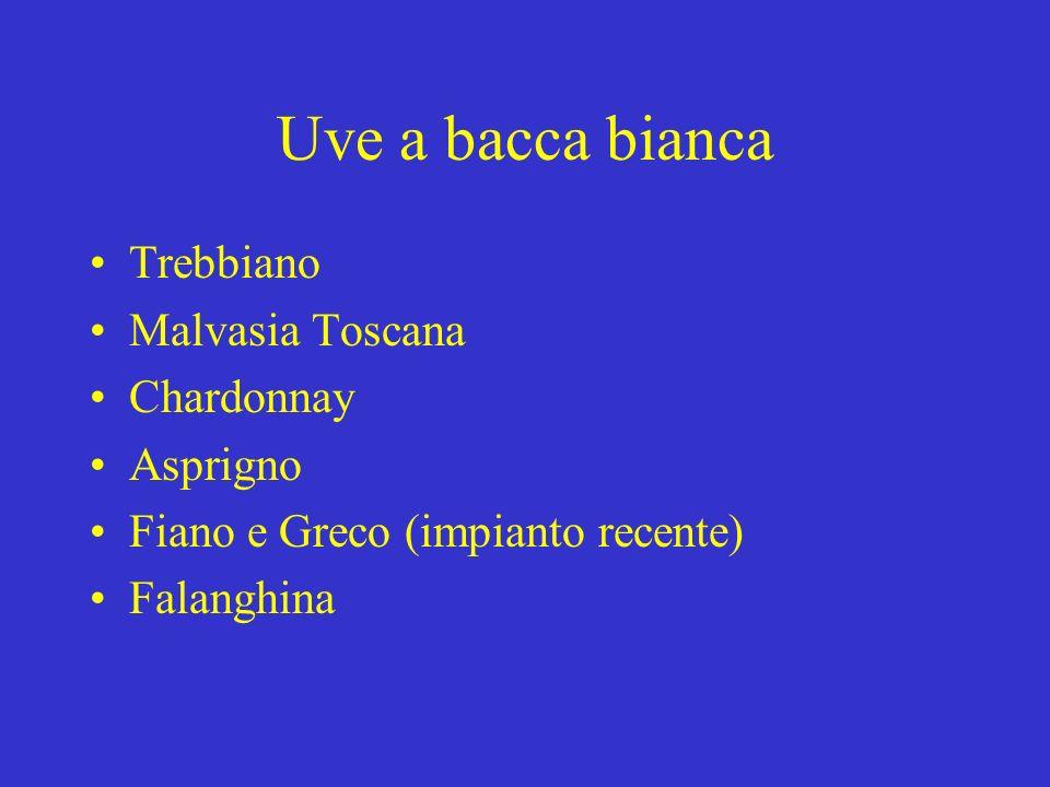 Uve a bacca bianca Trebbiano Malvasia Toscana Chardonnay Asprigno Fiano e Greco (impianto recente) Falanghina