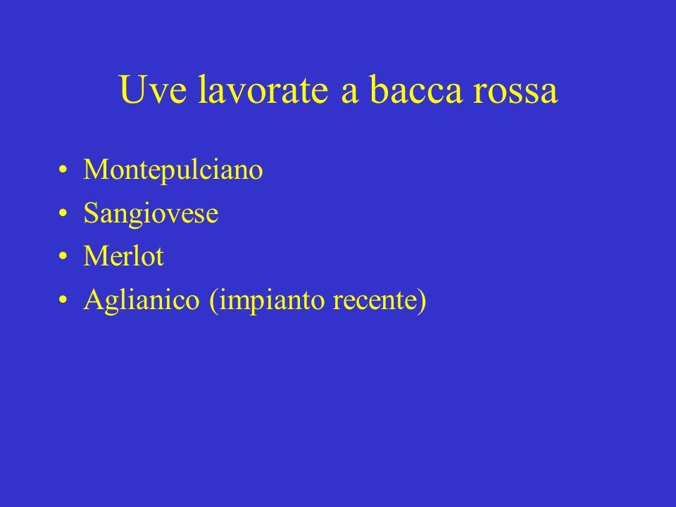 Uve lavorate a bacca rossa Montepulciano Sangiovese Merlot Aglianico (impianto recente)