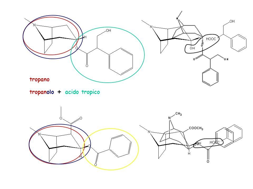 differisce dallatropina per il tipo di acido che esterifica la funzione alcolica è un derivato del tropano presenta un gruppo ammidico presenta due centri chirali più di una delle indicazioni fornite è esatta A B C D E A: la risposta A non è corretta.