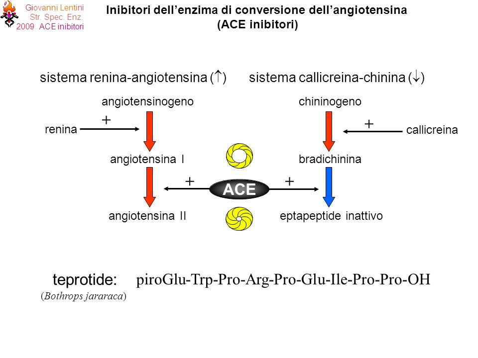Giovanni Lentini Str. Spec. Enz. 2009 ACE inibitori angiotensinogeno angiotensina I chininogeno bradichinina renina + + callicreina sistema renina-ang