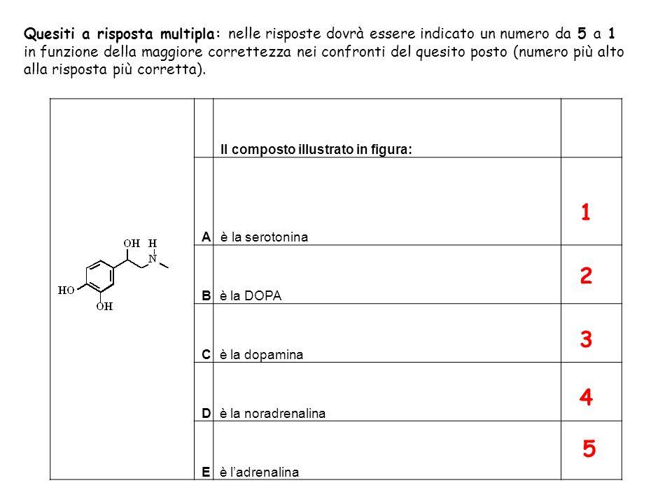 Biosintesi dei neurotrasmettitori adrenergici NH 2 COOH HO Tirosina HO NH 2 COOH HO L-DOPA NH 2 HO Dopamina NH 2 HO OH Noradrenalina (NA) N HO OH H Adrenalina Tirosina idrossilasi DOPA decarbossilasi Dopamina β-idrossilasi Feniletanolammina N-metiltransferasi