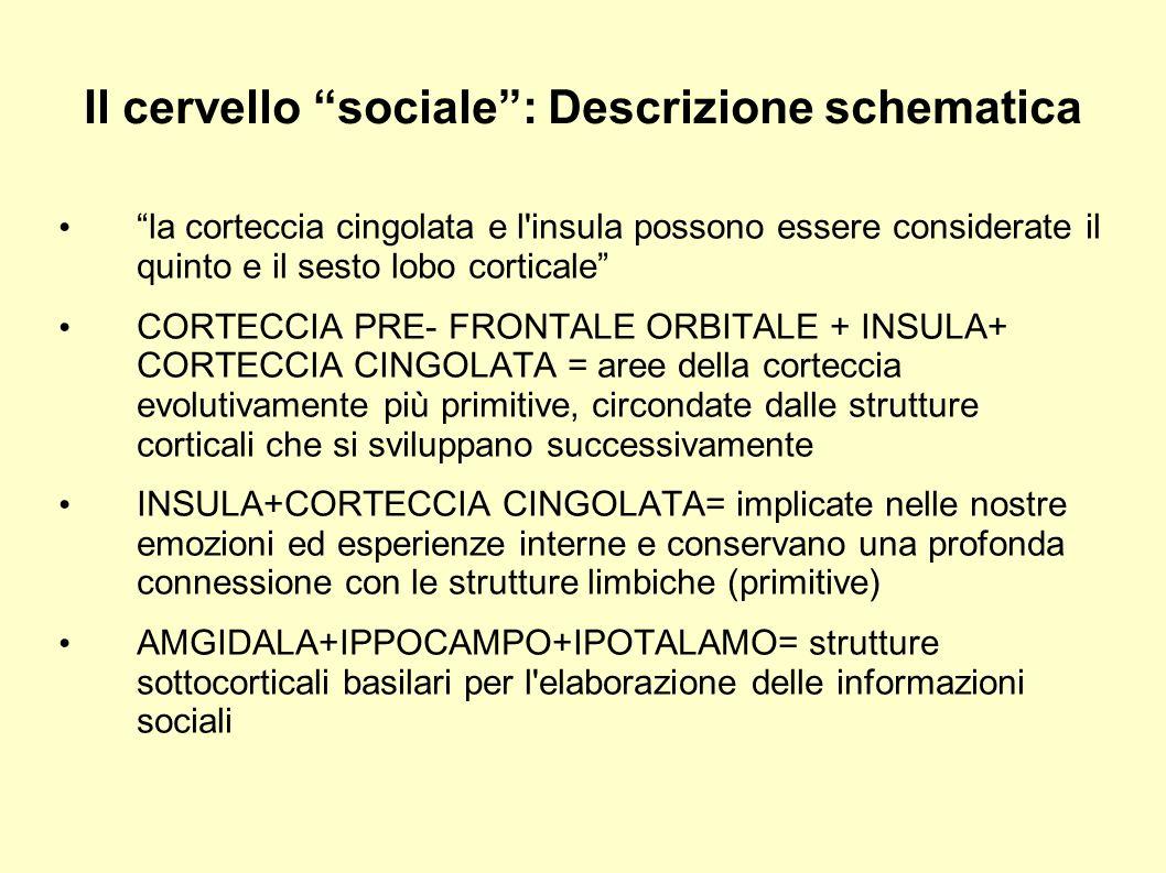 Il cervello sociale: Descrizione schematica AMIGDALA: componente essenziale delle reti neurali associate alla paura, attaccamento, early memory.