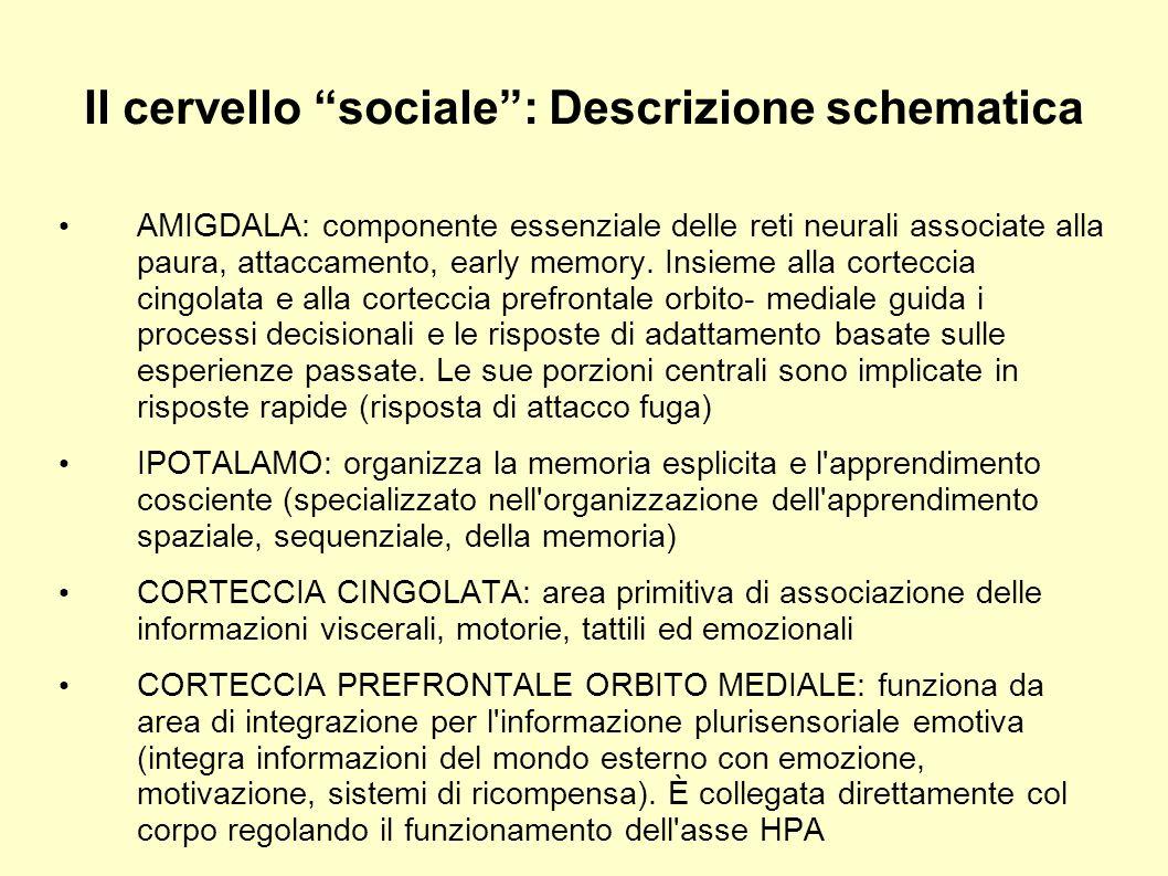 Il cervello sociale: Descrizione schematica AMIGDALA: componente essenziale delle reti neurali associate alla paura, attaccamento, early memory. Insie