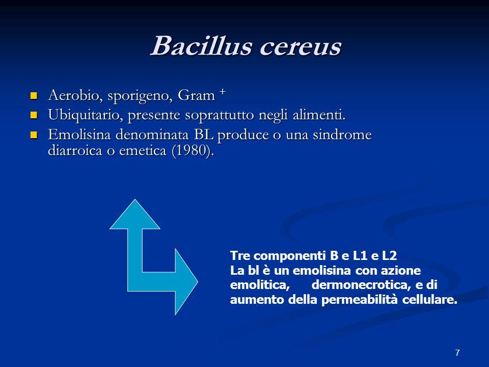 8 Staphylococcus aureus Gram+.Aerobio.