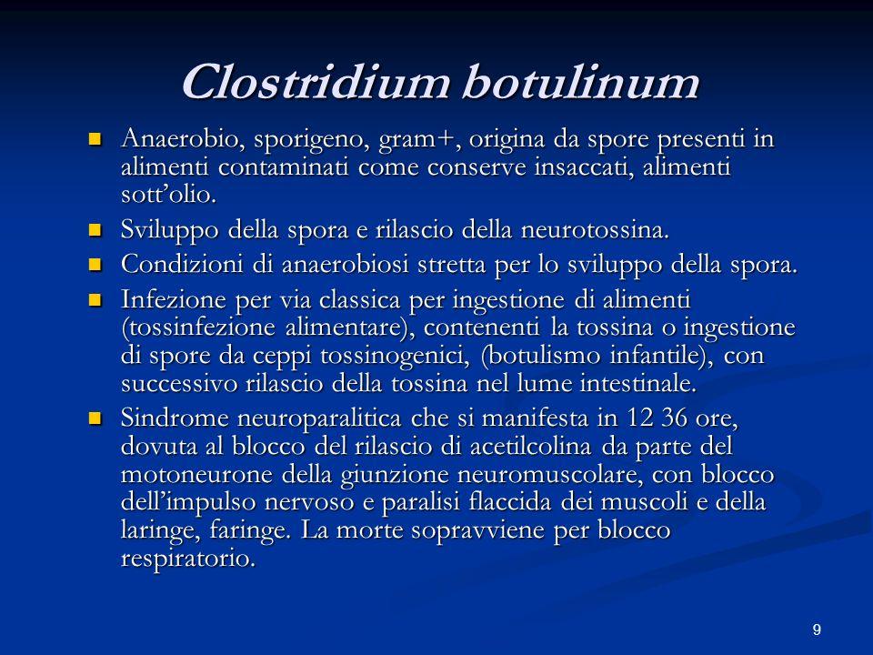 9 Clostridium botulinum Anaerobio, sporigeno, gram+, origina da spore presenti in alimenti contaminati come conserve insaccati, alimenti sottolio.