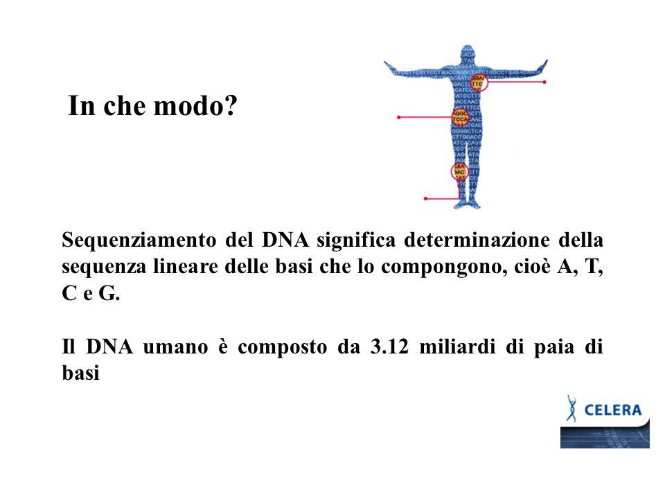 In che modo? Sequenziamento del DNA significa determinazione della sequenza lineare delle basi che lo compongono, cioè A, T, C e G. Il DNA umano è com