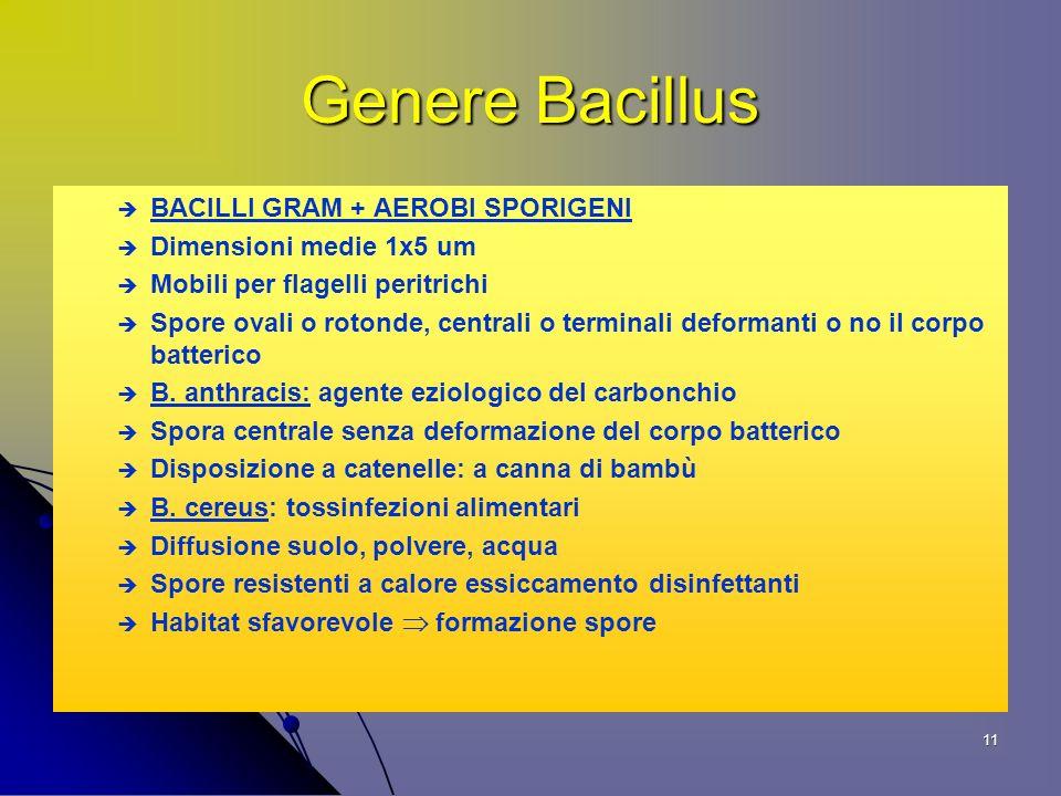 11 Genere Bacillus BACILLI GRAM + AEROBI SPORIGENI Dimensioni medie 1x5 um Mobili per flagelli peritrichi Spore ovali o rotonde, centrali o terminali deformanti o no il corpo batterico B.