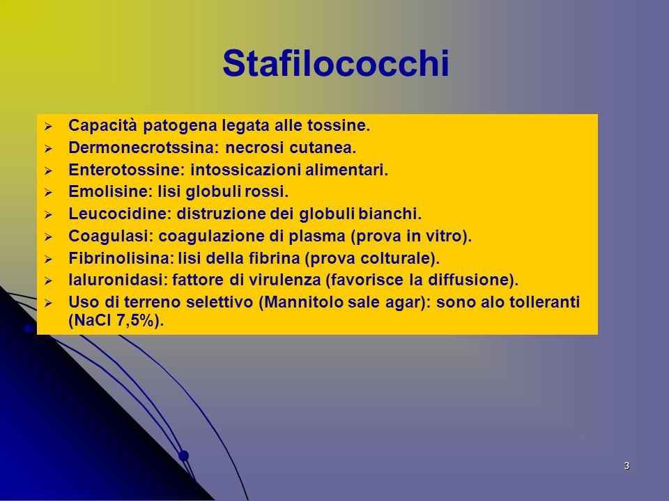 4 Prove di identificazione degli stafilococchi Esami diretti microscopici (Gram colorazione,Esame a fresco).