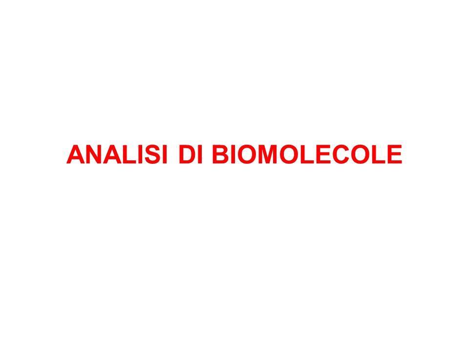 PROTEINE E AMINOACIDI proteina HCl 6N 110°C 24-72 ore Amino acidi In queste condizioni drastiche alcuni amino acidi, come cisteina, triptofano Asparagina, glutamina vengono distrutti Accorgimenti specifici Determinazione della struttura primaria