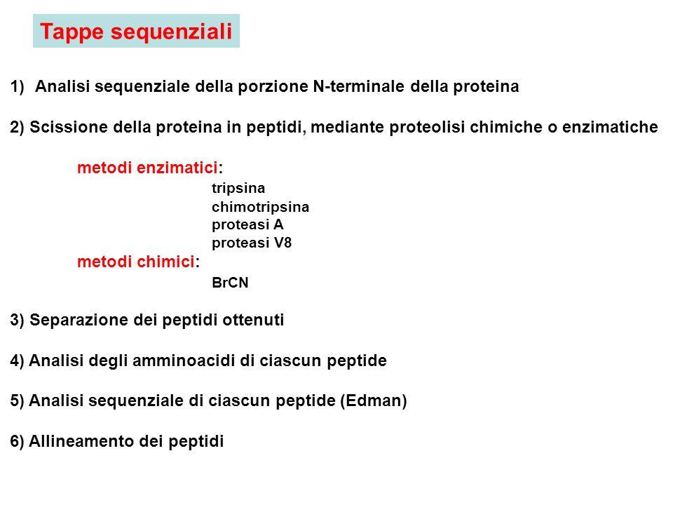 1)Analisi sequenziale della porzione N-terminale della proteina 2) Scissione della proteina in peptidi, mediante proteolisi chimiche o enzimatiche met