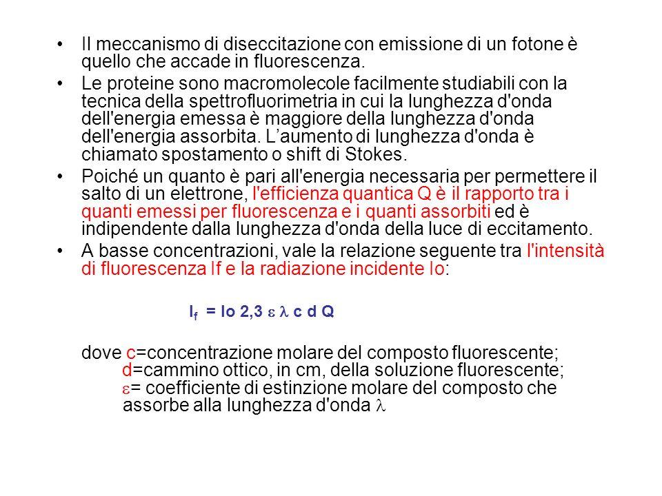 Il meccanismo di diseccitazione con emissione di un fotone è quello che accade in fluorescenza. Le proteine sono macromolecole facilmente studiabili c
