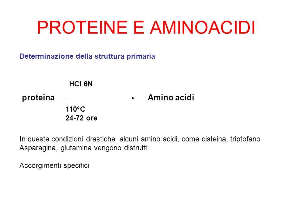 PROTEINE E AMINOACIDI proteina HCl 6N 110°C 24-72 ore Amino acidi In queste condizioni drastiche alcuni amino acidi, come cisteina, triptofano Asparag