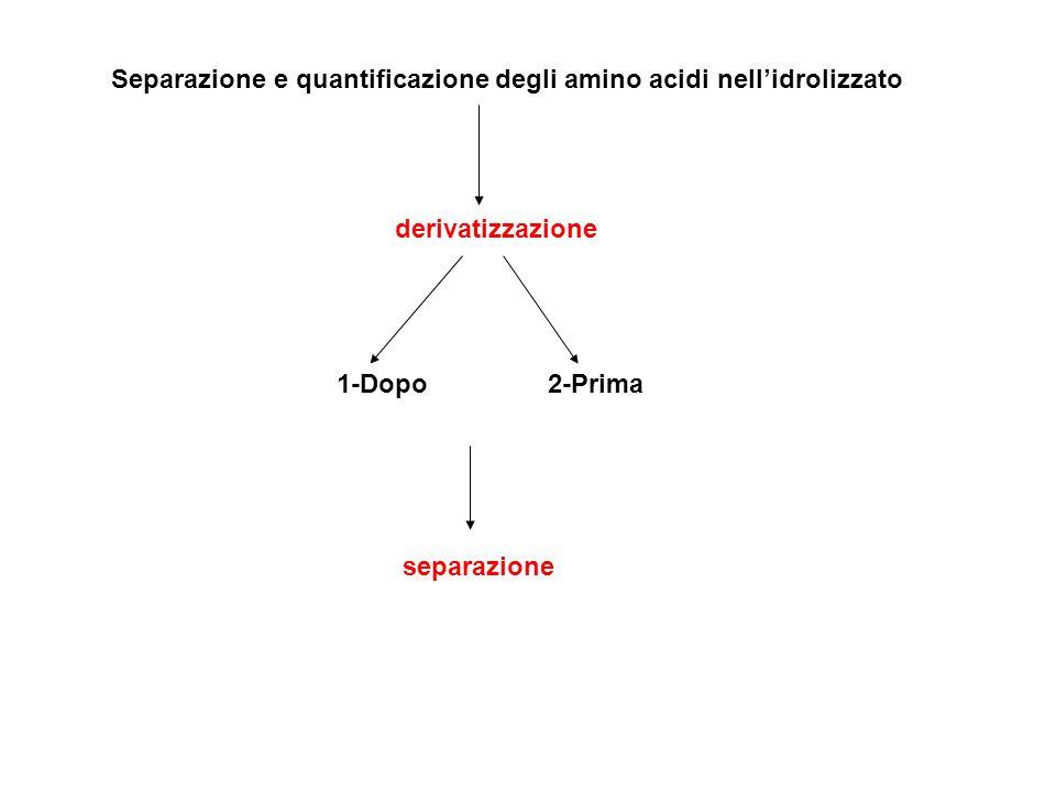 Separazione e quantificazione degli amino acidi nellidrolizzato derivatizzazione 1-Dopo2-Prima separazione