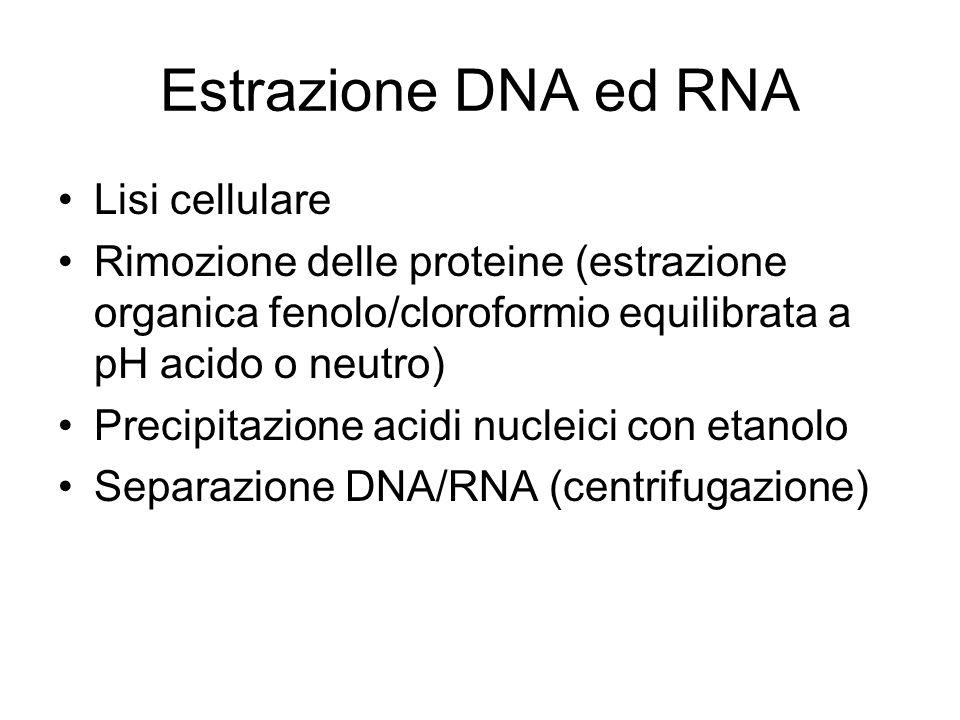 Estrazione DNA ed RNA Lisi cellulare Rimozione delle proteine (estrazione organica fenolo/cloroformio equilibrata a pH acido o neutro) Precipitazione