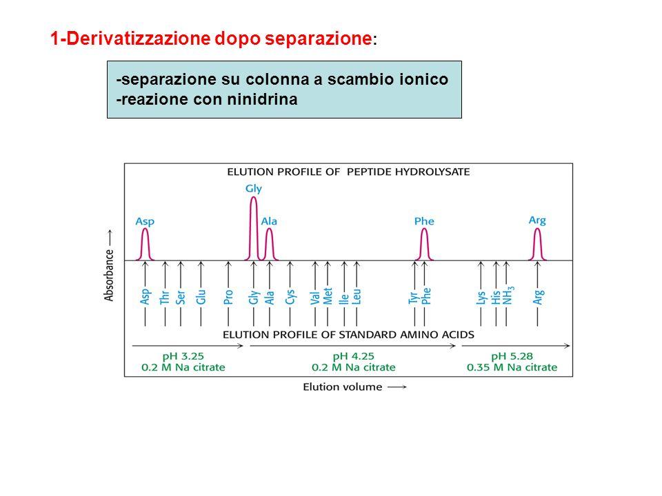 Gli amino acidi vengono fatti ragire a 100°C con la ninidrina Si formano derivati colorati che vengono letti a 570 nm