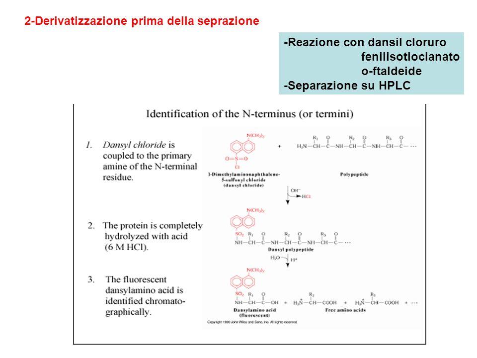 2-Derivatizzazione prima della seprazione -Reazione con dansil cloruro fenilisotiocianato o-ftaldeide -Separazione su HPLC