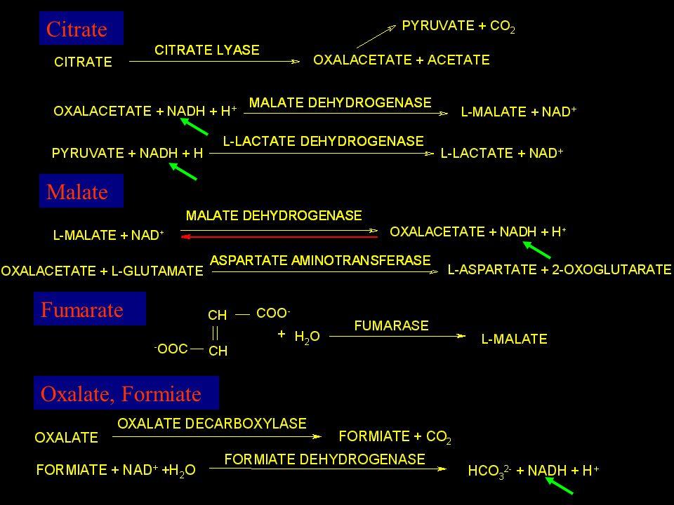 Citrate Malate Fumarate Oxalate, Formiate