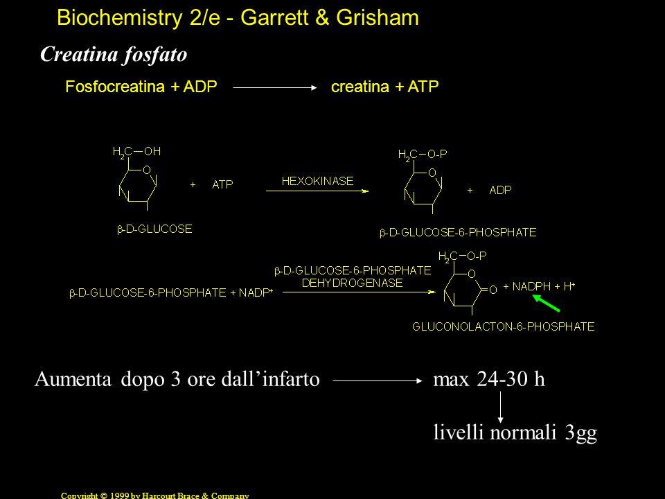 Biochemistry 2/e - Garrett & Grisham Copyright © 1999 by Harcourt Brace & Company Creatina chinasi Fosfocreatina + ADPcreatina + ATP Aumenta dopo 3 or