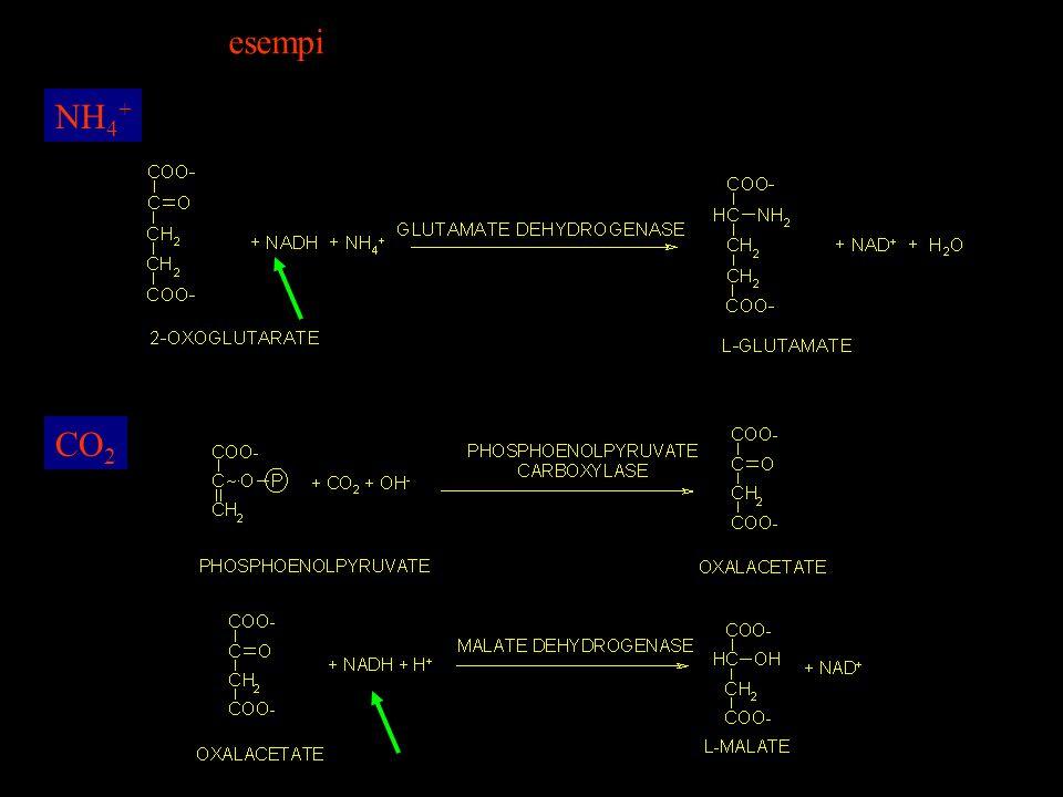 NH 4 + CO 2 esempi