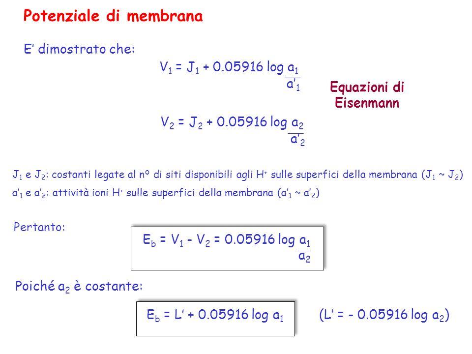 Potenziale di membrana E dimostrato che: V 1 = J 1 + 0.05916 log a 1 a1a1 V 2 = J 2 + 0.05916 log a 2 a2a2 J 1 e J 2 : costanti legate al n° di siti d