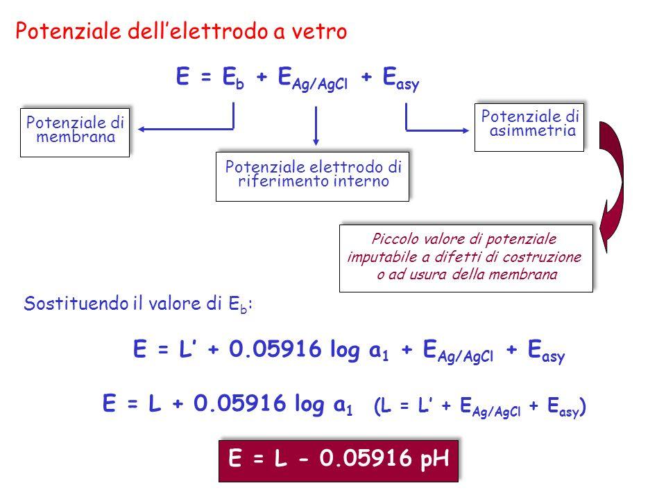 Potenziale dellelettrodo a vetro E = E b + E Ag/AgCl + E asy Sostituendo il valore di E b : E = L + 0.05916 log a 1 + E Ag/AgCl + E asy E = L + 0.0591