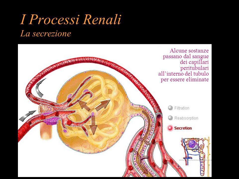 I Processi Renali La secrezione Alcune sostanze passano dal sangue dei capillari peritubulari allinterno del tubulo per essere eliminate