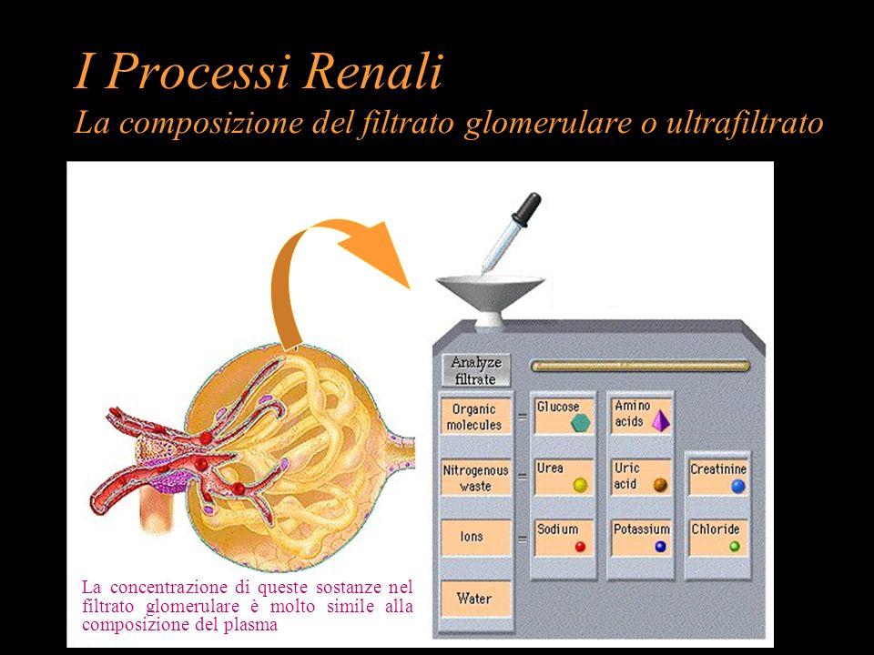 I Processi Renali La composizione del filtrato glomerulare o ultrafiltrato La concentrazione di queste sostanze nel filtrato glomerulare è molto simil