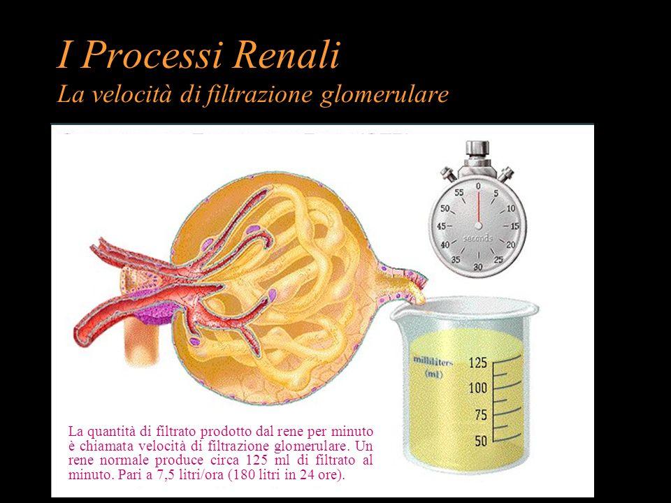 I Processi Renali La velocità di filtrazione glomerulare La quantità di filtrato prodotto dal rene per minuto è chiamata velocità di filtrazione glome