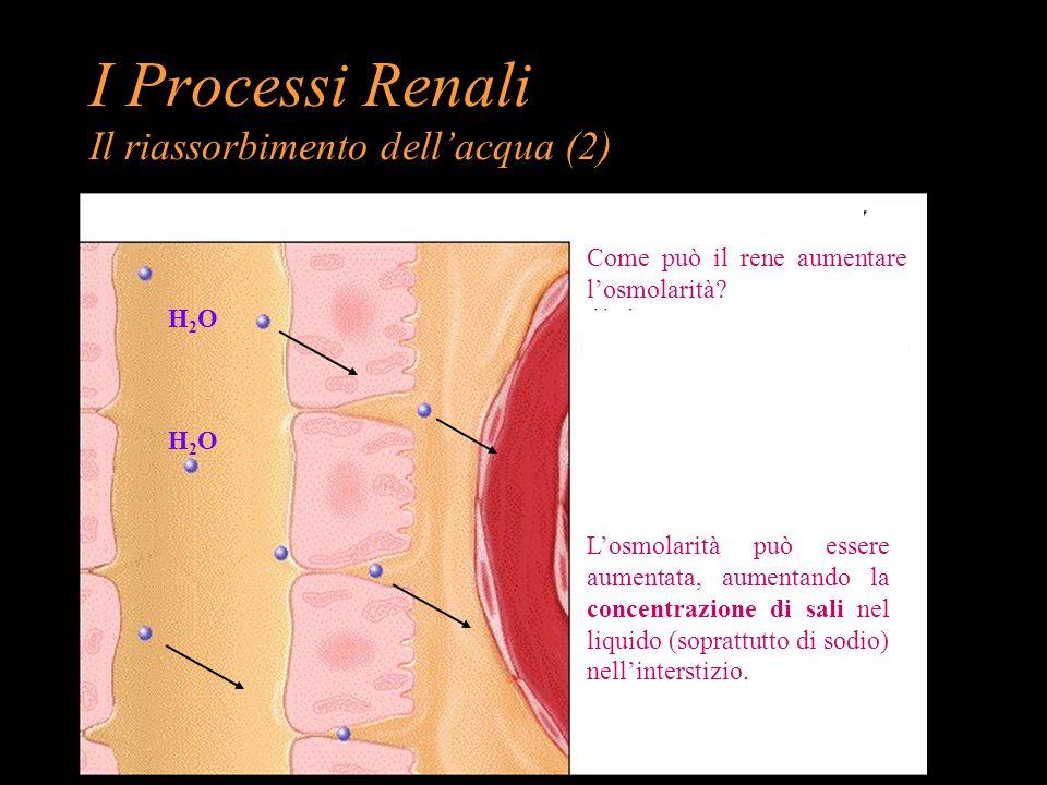 H2OH2O H2OH2O Come può il rene aumentare losmolarità? Losmolarità può essere aumentata, aumentando la concentrazione di sali nel liquido (soprattutto