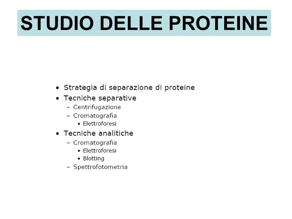 STUDIO DELLE PROTEINE