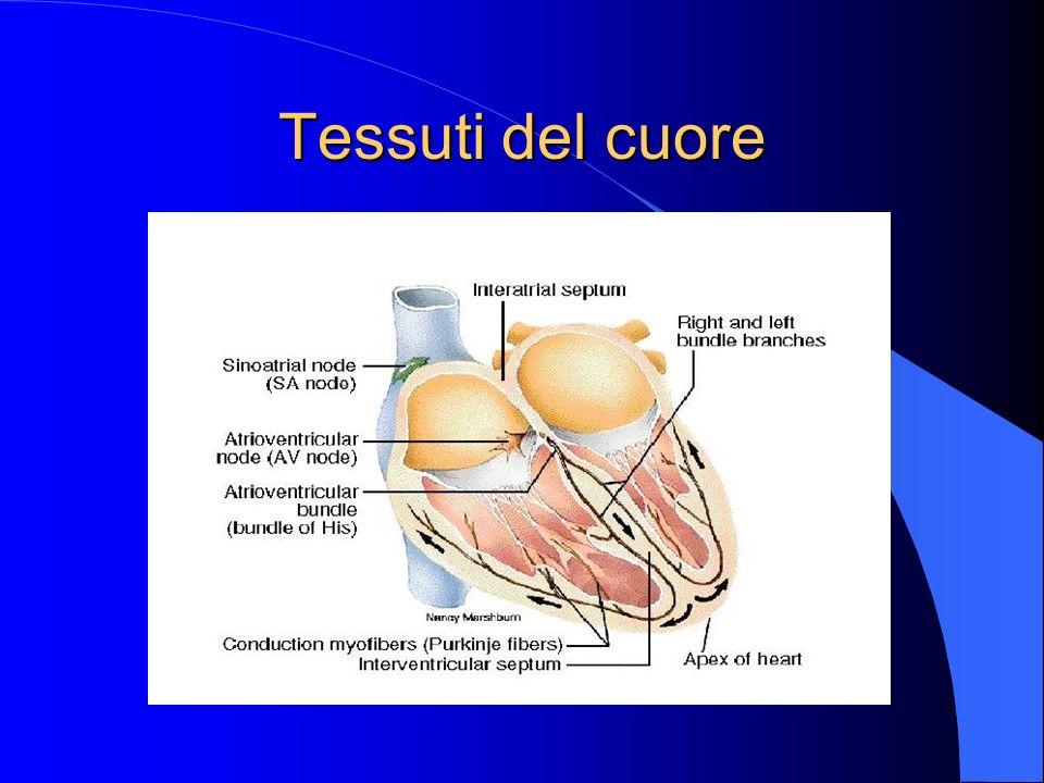 Tessuti del cuore