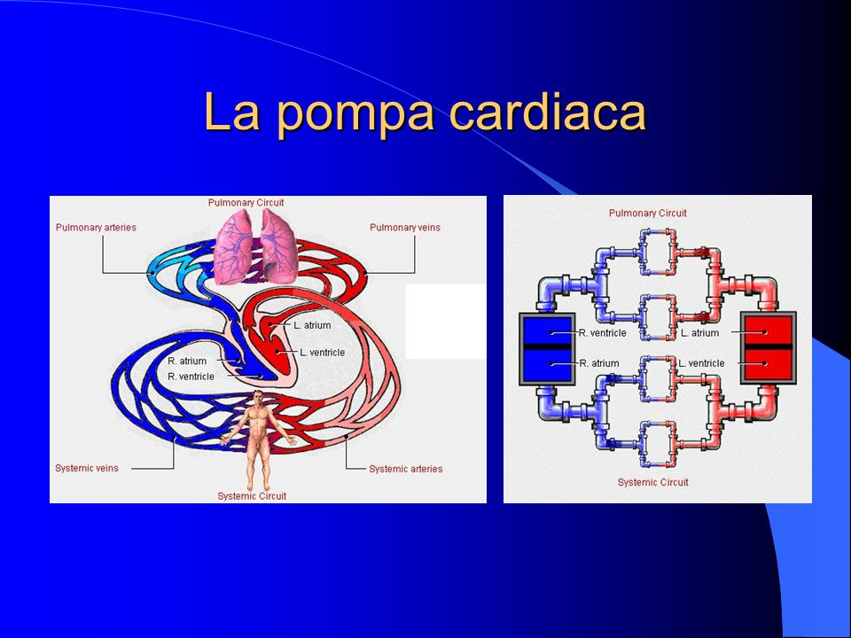 La pompa cardiaca