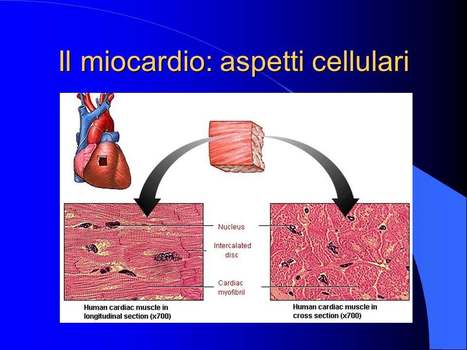 Il ciclo cardiaco: le fasi Diastole ventricolare:a) fase isovolumetrica b) riempimento rapido c) diastasi d) sistole atriale Sistole ventricolare: a) contrazione isovolumetrica b) eiezione