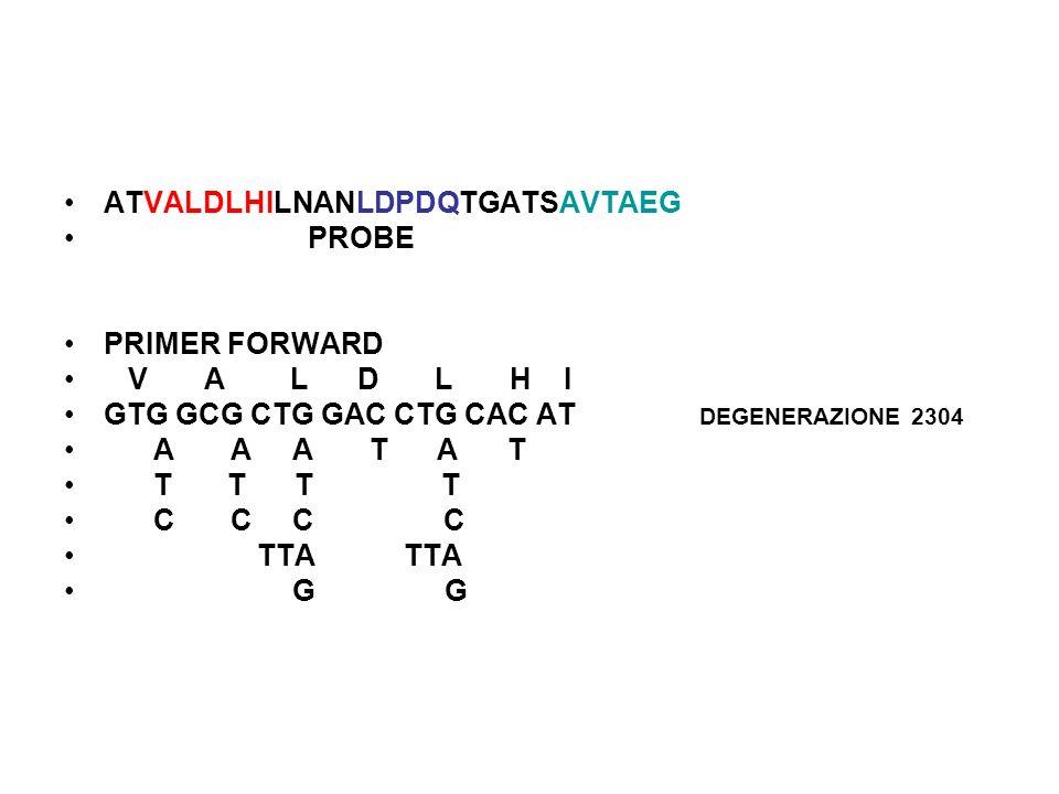ATVALDLHILNANLDPDQTGATSAVTAEG PROBE PRIMER FORWARD V A L D L H I GTG GCG CTG GAC CTG CAC AT DEGENERAZIONE 2304 A A A T A T T T T T C C C C TTA TTA G