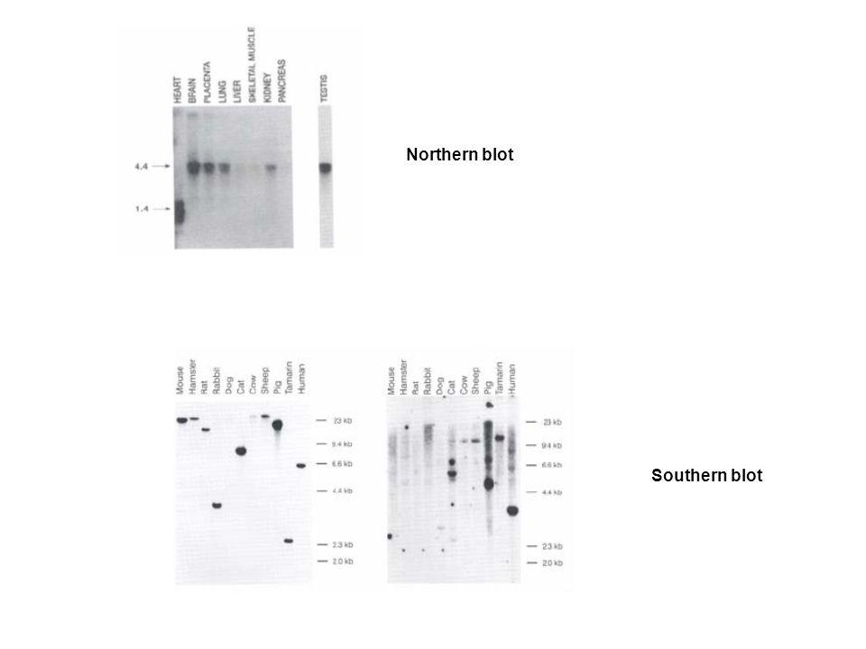 Northern blot Southern blot