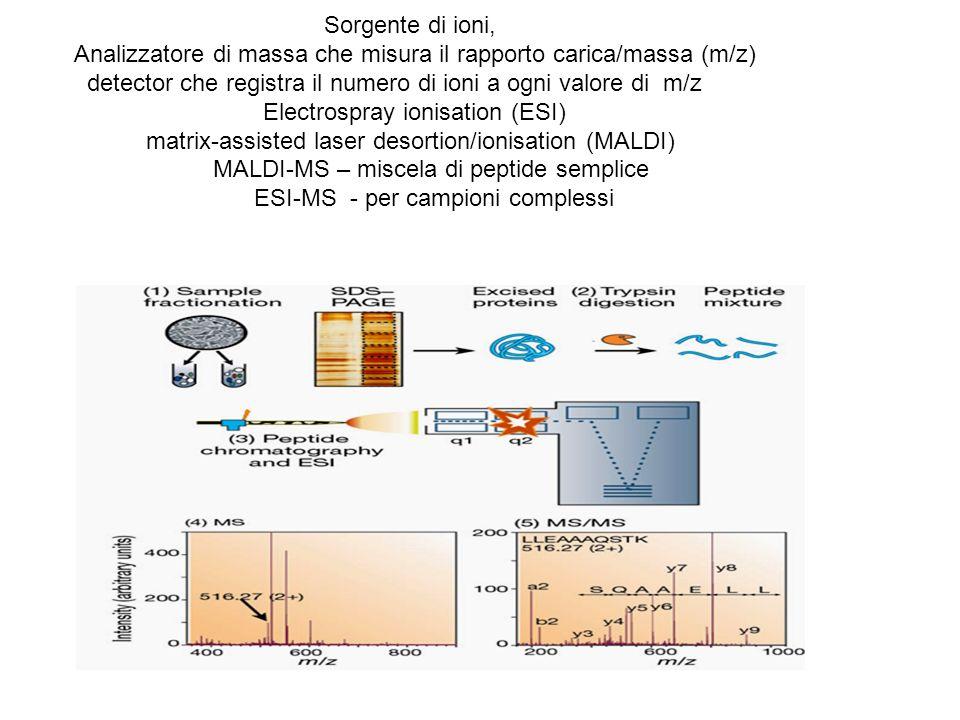Sorgente di ioni, Analizzatore di massa che misura il rapporto carica/massa (m/z) detector che registra il numero di ioni a ogni valore di m/z Electrospray ionisation (ESI) matrix-assisted laser desortion/ionisation (MALDI) MALDI-MS – miscela di peptide semplice ESI-MS - per campioni complessi