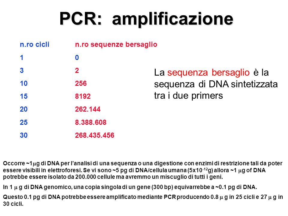 PCR: amplificazione n.ro cicli 1 3 10 15 20 25 30 n.ro sequenze bersaglio 0 2 256 8192 262.144 8.388.608 268.435.456 La sequenza bersaglio è la sequenza di DNA sintetizzata tra i due primers Occorre ~1 g di DNA per lanalisi di una sequenza o una digestione con enzimi di restrizione tali da poter essere visibili in elettroforesi.