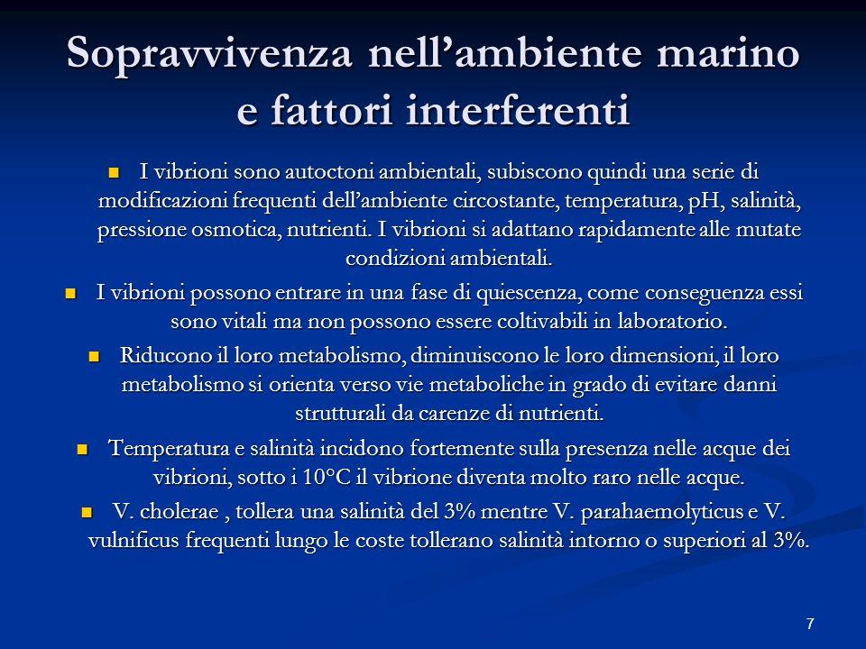 7 Sopravvivenza nellambiente marino e fattori interferenti I vibrioni sono autoctoni ambientali, subiscono quindi una serie di modificazioni frequenti